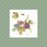 Framed Orchard Bloom III Border