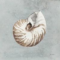 Framed Sand and Seashells I