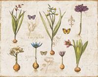 Framed Histoire Naturelle V v2