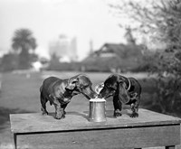 Framed 1890S Two Dachshund Puppies