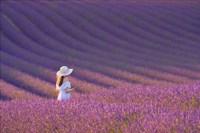 Framed Girl in Lavender Field