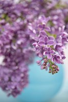 Framed Lilacs in Blue Vase II