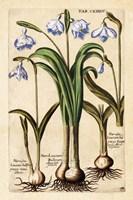 Framed Matthaeus Merian Narcissus-Early16s