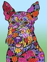Framed Flowers Scottish Terrier