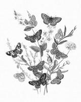Framed Butterfly Bouquet I Linen BW I