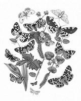 Framed Butterfly Bouquet IV Linen BW IV
