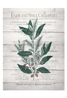 Framed Botanical A v2