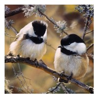 Framed In the Black - Black Capped Chickadees (detail)