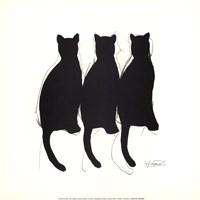 Framed Katzenmusik