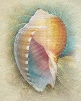 Framed Aquatica III