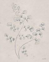 Framed Soft Summer Sketches IV