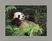 Framed Giant Panda
