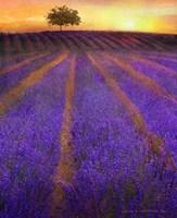 Framed Orange Rows Lavender