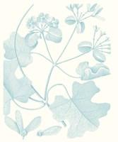 Framed Botanical Study in Spa II
