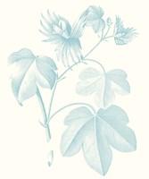 Framed Botanical Study in Spa IV