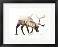 Framed Arctic Reindeer