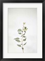 Framed Simple Stems II