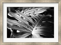 Framed Philodendron