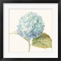 Framed Floursack Florals V - Blue Hydrangea Crop