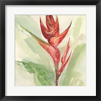 Framed Exotic Flower IV