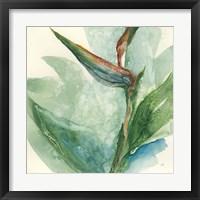 Framed Exotic Flower III