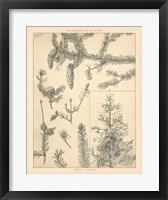 Framed Vintage Tree Sketches I