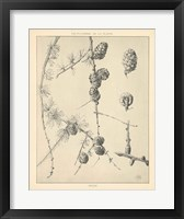 Framed Vintage Tree Sketches II