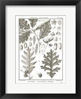 Framed Histoire Naturelle Botanique I Light