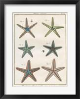 Framed Histoire Naturelle Starfish I