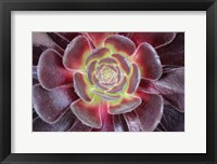 Framed Bright Succulent