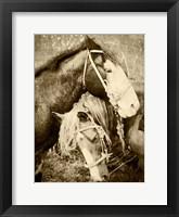 Framed Vintage Horses