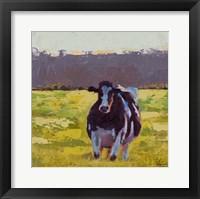 Framed Fat Cow in the Field