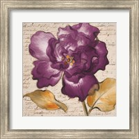 Framed Lilac Beauty I
