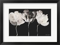 Framed Trio in Light on Black
