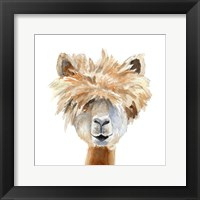 Framed Llama with Bangs