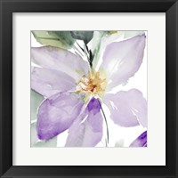 Framed Clematis in Purple Shades I