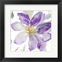 Framed Clematis in Purple Shades II