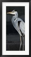 Framed Heron on Black I