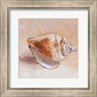 Framed Copper Sea Shell