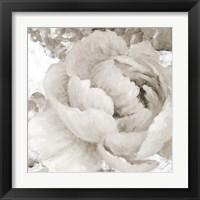 Framed Light Grey Flowers II