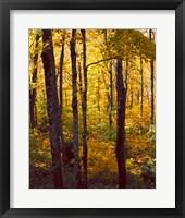 Framed Sanctuary Woods I