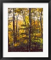 Framed Sanctuary Woods II
