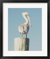 Framed Pelican Post Muted I