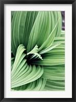 Framed Green Leaf Blooms II