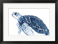 Framed Turtle in the Blues