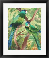 Framed Tropical Birds II