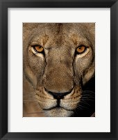 Framed Golden Eyes