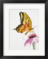 Framed Butterfly Nectar