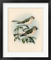Framed Bird Study I