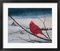 Framed Cardinal In A Pastel Sky